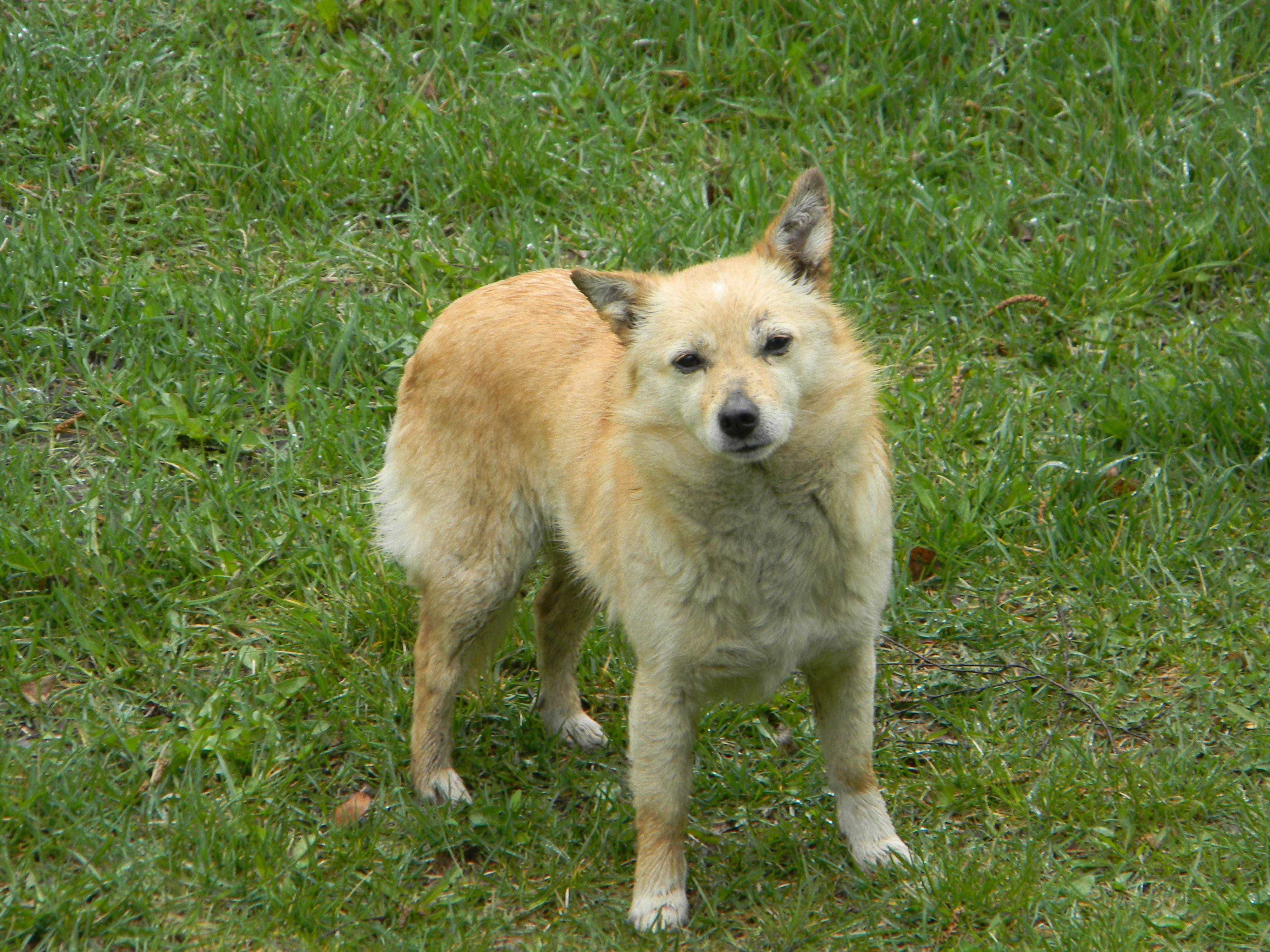 - pies__znaleziony_na_poczatku_maja_w_miejscowosci_ignacow..jpg